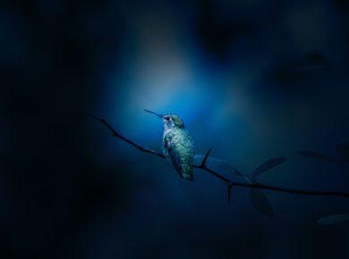 Ein blauer Vogel auf einem Ast